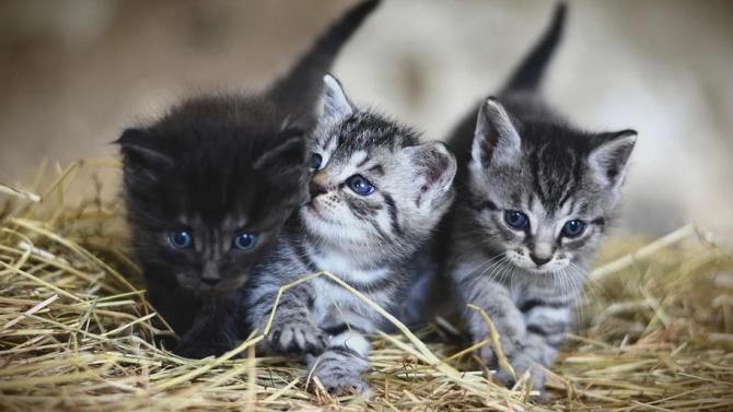 Котки парализираха работата на полицейски участък в Германия