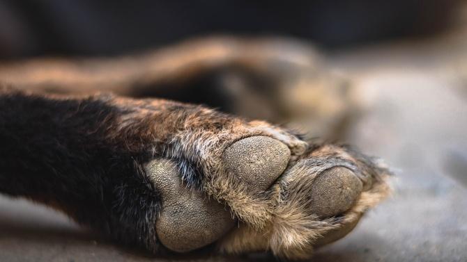 Отровиха четири кучета в Долна баня