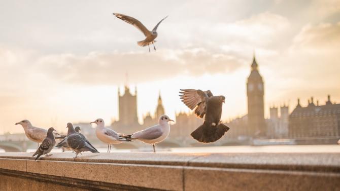 Какво се случва в Лондон след рязкото затваряне заради новия щам на COVID-19