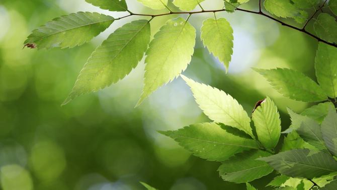 Над 150 дръвчета са засадени по програмите за временна заетост в Радомир