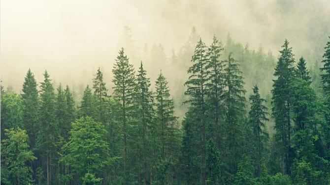 Нова мярка ще стимулира запазването и увеличаването на горски участъци