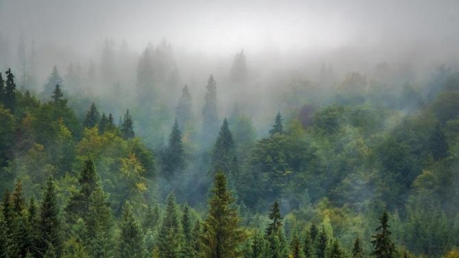Ето колко пари са инвестирани за закупуване на частни горски имоти през 2020 г.