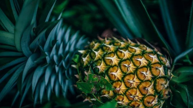 Учени превръщат листа от ананаси в дронове