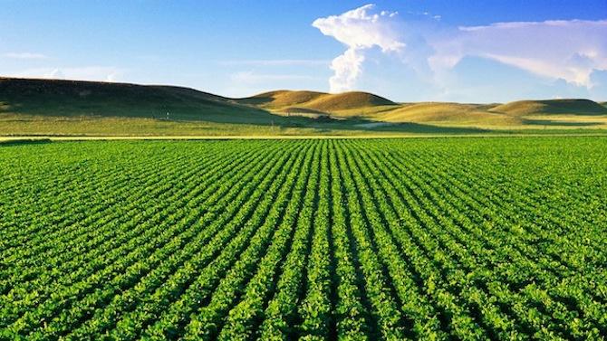 Субсидиите за фермерите ще се изплащат по-рано от обичайното