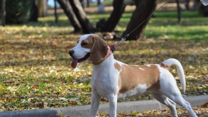 Инспектори дебнат за кучешки паспорти в парковете. Столичният инспекторат извършва