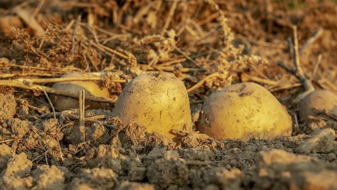 Производителите на картофи, лук и чесън получиха есемес за доказване на обвързаната подкрепа