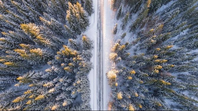 """Заради паднали дървета е затворен проходът """"Петрохан"""" и в двете посоки"""