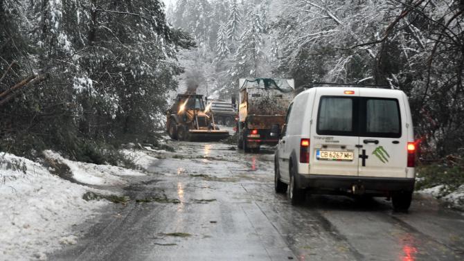 Паднали дървета блокираха пътя до софийското село Плана