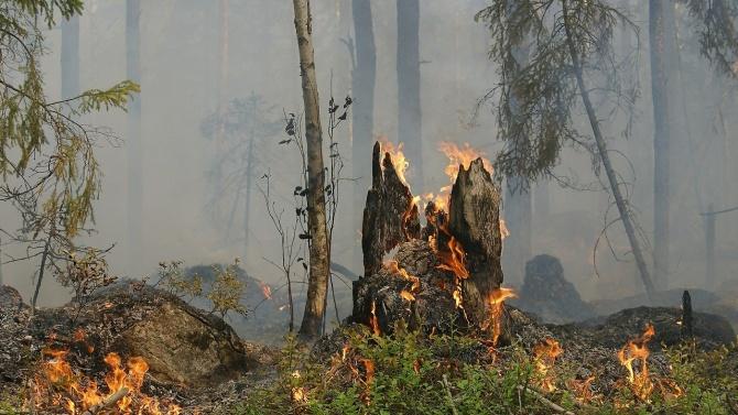 Ето колко от горите в Североизточното държавно предприятие са били засегнати от пожари