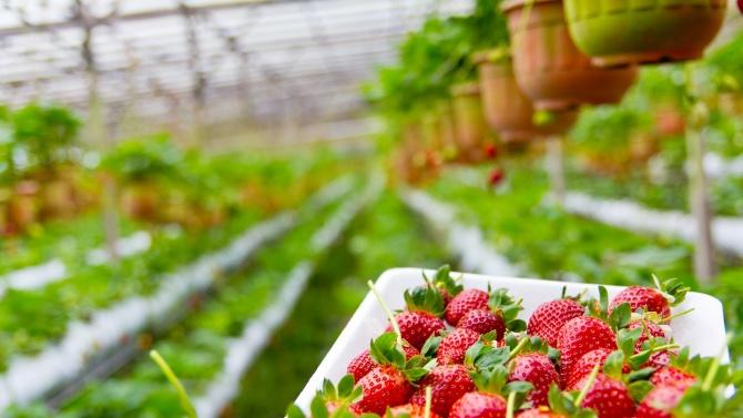 """ДФ """"Земеделие"""" отпусна 6 млн. лева за контрол на вредителите по трайните насаждения"""