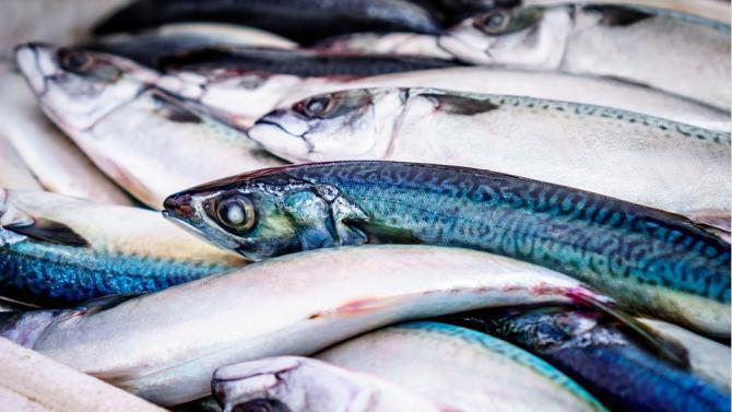 Шотландският риболов е в криза след Брекзит
