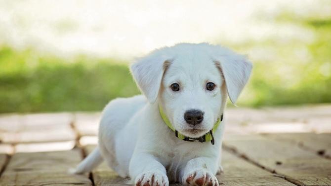 Русенци масово не плащат данъци за кучетата си