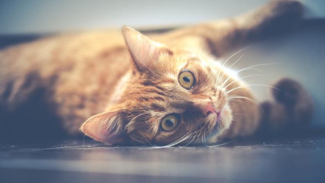 Котка оцеля 3 седмици в корабен контейнер, хранила се с бонбони