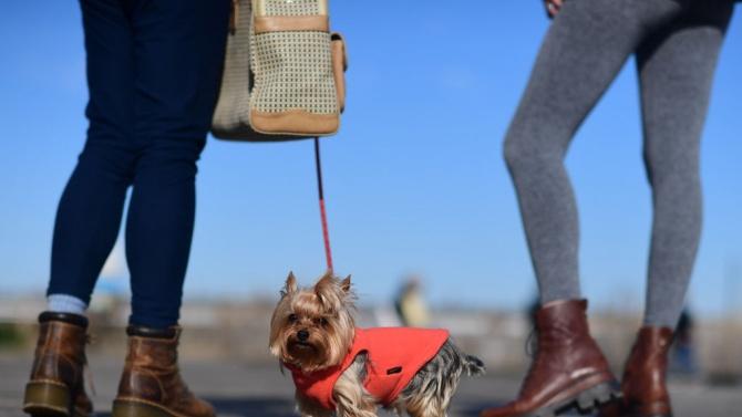 22 русенци са регистрирали домашните си кучета в общината от началото на годината
