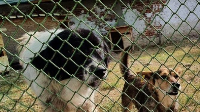 Община Асеновград и организации в защита на бездомните кучета водят преговори за сътрудничество