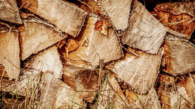Затвориха обект за преработка на дървесина в Тутракан заради престъпна схема