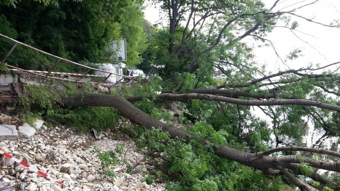 Аварийни екипи на крак заради паднали клони и дървета в София