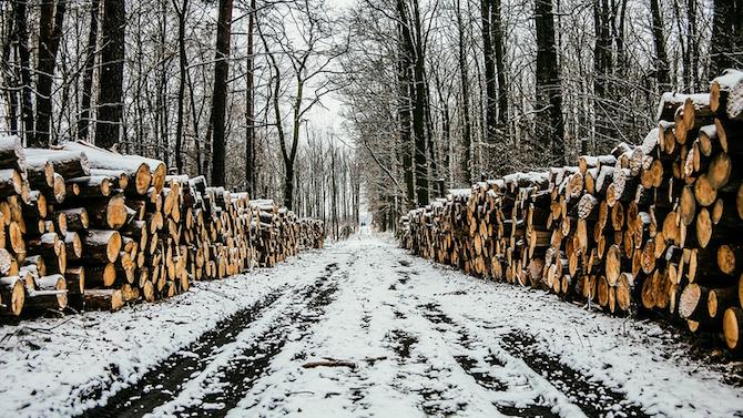 Спряна е сечта в обекти за добив на дървесина в района на Царево и Малко Търново