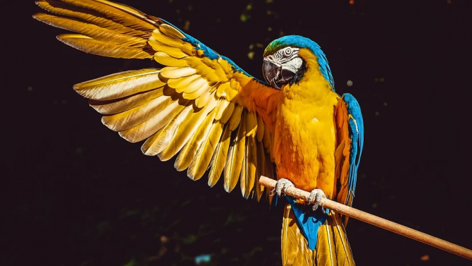 Папагал, който пее в дует със стопанина си, стана интернет звезда