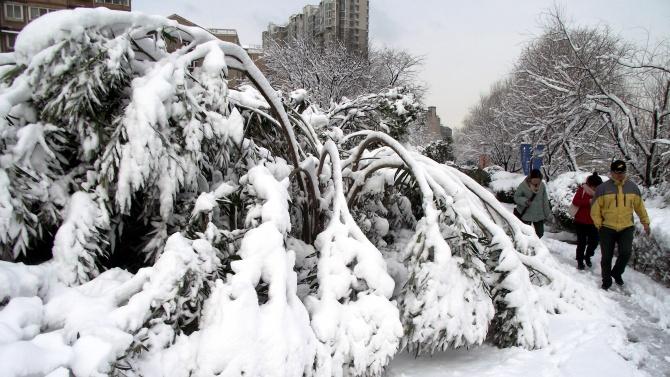 Мадрид ще отсече 80 000 дървета, пострадали от снежната буря