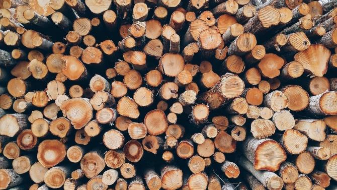 Незаконно добити дърва са открити в частни имоти в омуртагското село Обител