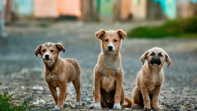 """Повече кучета са осиновени от приютите на ОП """"Екоравновесие"""" през"""