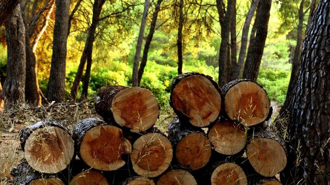 Незаконно добити дърва са намерени в частни имоти в исперихското село Драгомъж