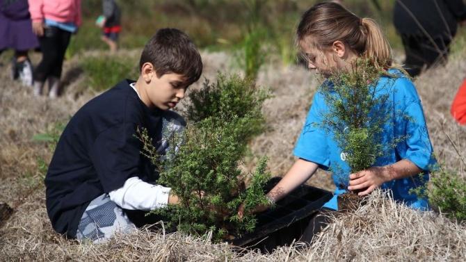 Деца ще засадят 300 дръвчета в Павликенско