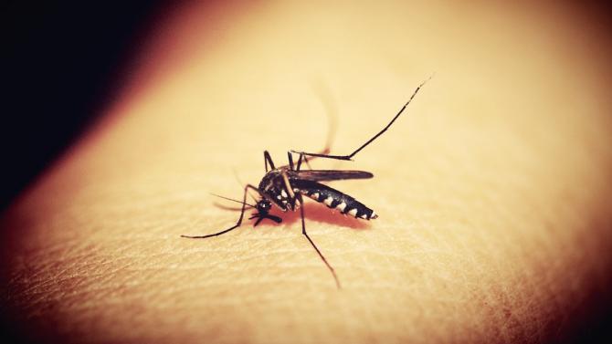 СЗО лансира план за справяне с пренебрегнатите болести