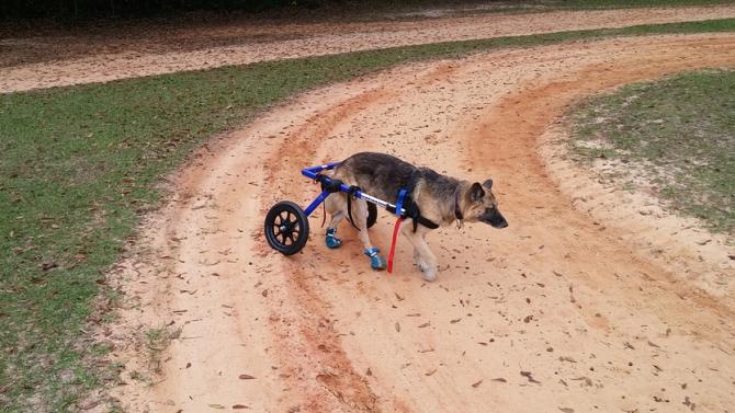Майстор на инвалидни колички за кучета и котки получи признание