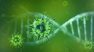 Проф. Мурджева с уточнение за новата мутация на COVID-19