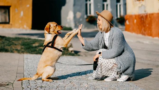 Жените играли ключова роля за приобщаването на кучетата