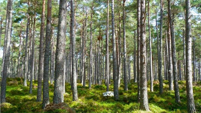 Държавните предприятия ще инвестират до 2 млн. лв. за закупуване на частни горски имоти през 2021 г.