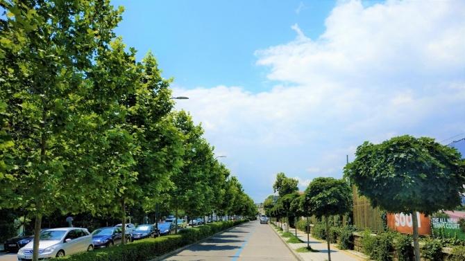 Община Бургас засажда 200 дървета