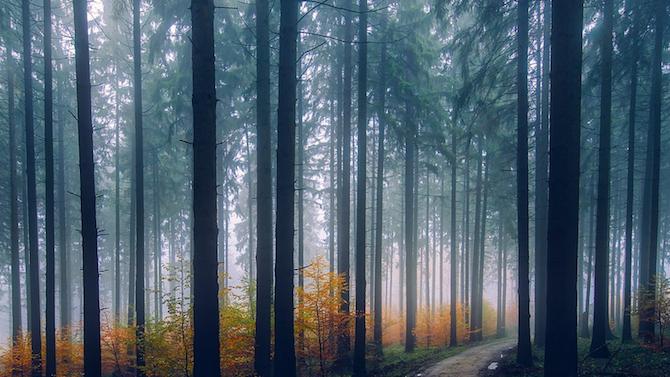 Собственици на гори от Търговищко подадоха рекордно много заявления за продажба през 2020 г.