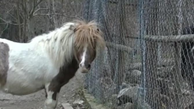 """Едва до 500 лв. глоба за собственика на пони, пратило дете в """"Пирогов"""""""