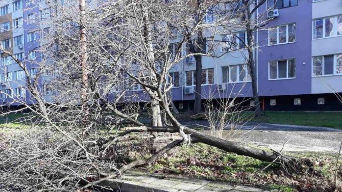 Вятърът събори снощи 20 дървета и стотици клони в Бургас