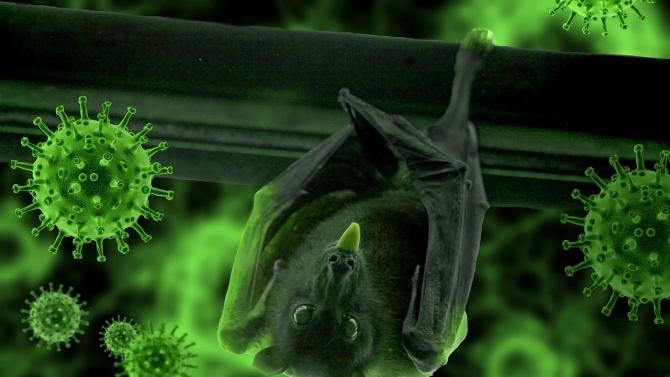 Коронавирусът - пренесен от животно или създаден в лаборатория?
