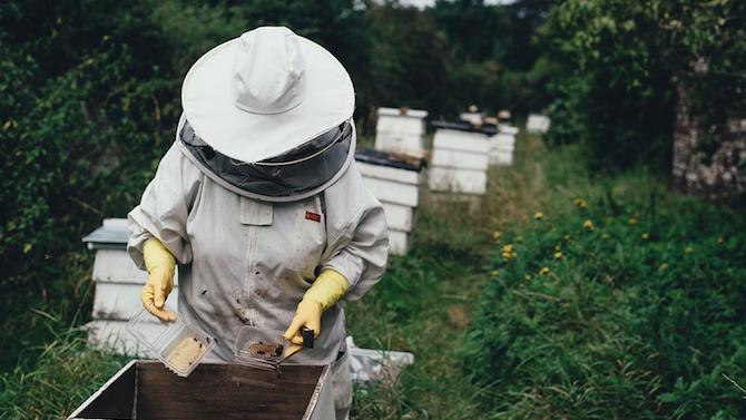 Отношението към меда и пчелните продукти трябва да се възпитава от детството, смята пчелар от Търговище