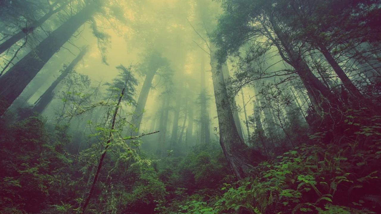 Разработват се специфични модели за управление на горите в условията на климатични промени