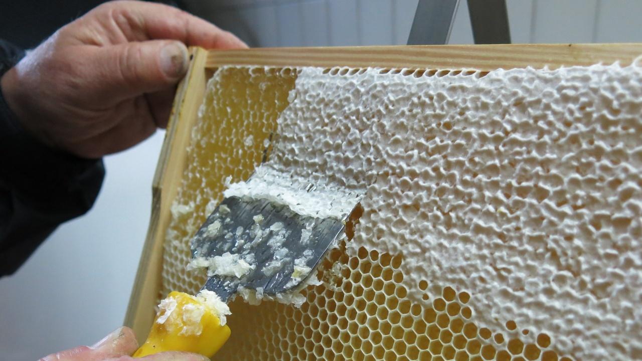 Пчелари обявиха готовност за протест