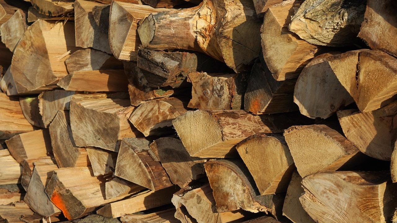 Проверка за незаконен добив на дървесина е започната в Ардино
