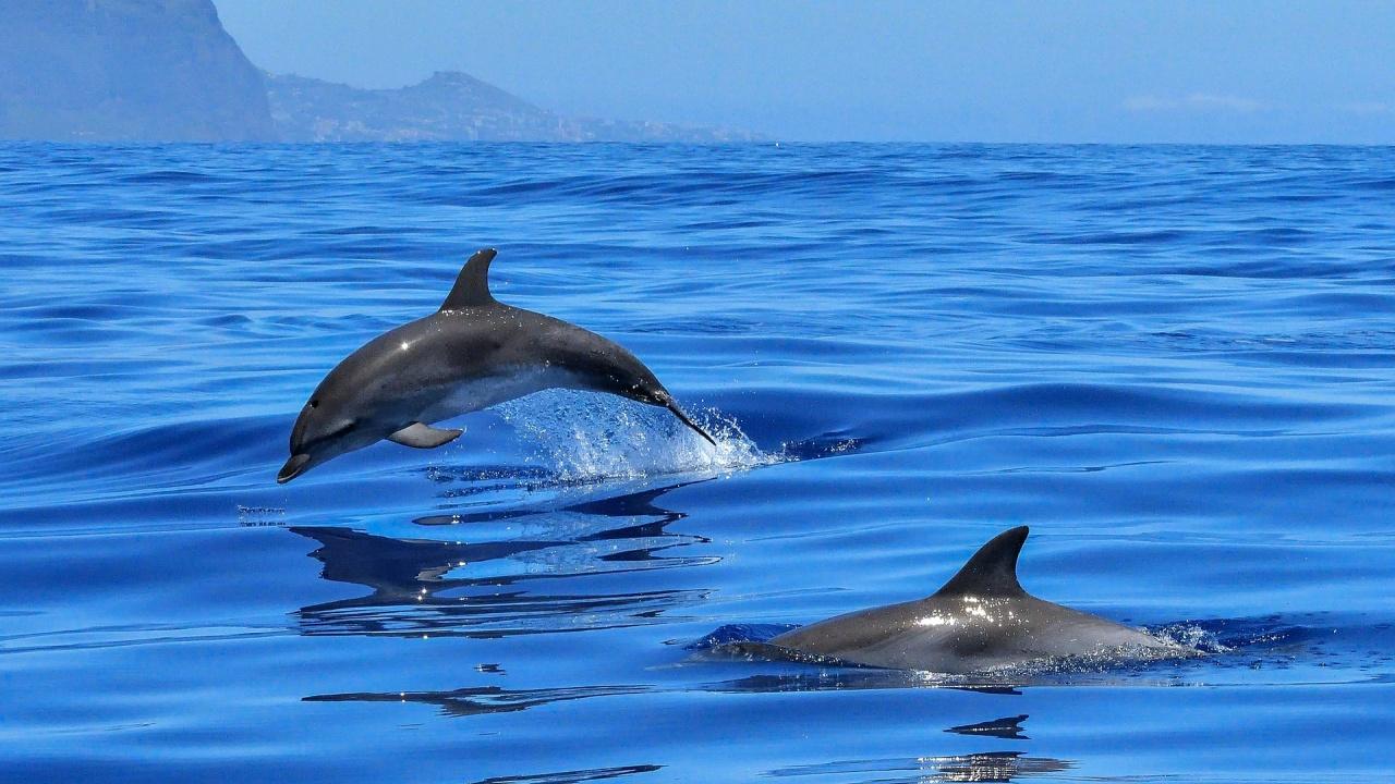 Делфините приличат на хората повече, отколкото се смяташе досега