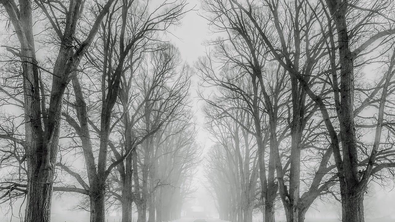 Мъгла в Силистренско