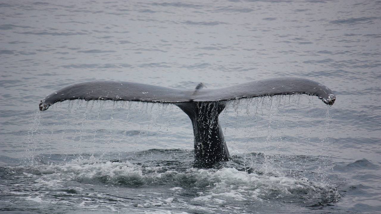 Десетки китове са заседнали отново край Нова Зеландия