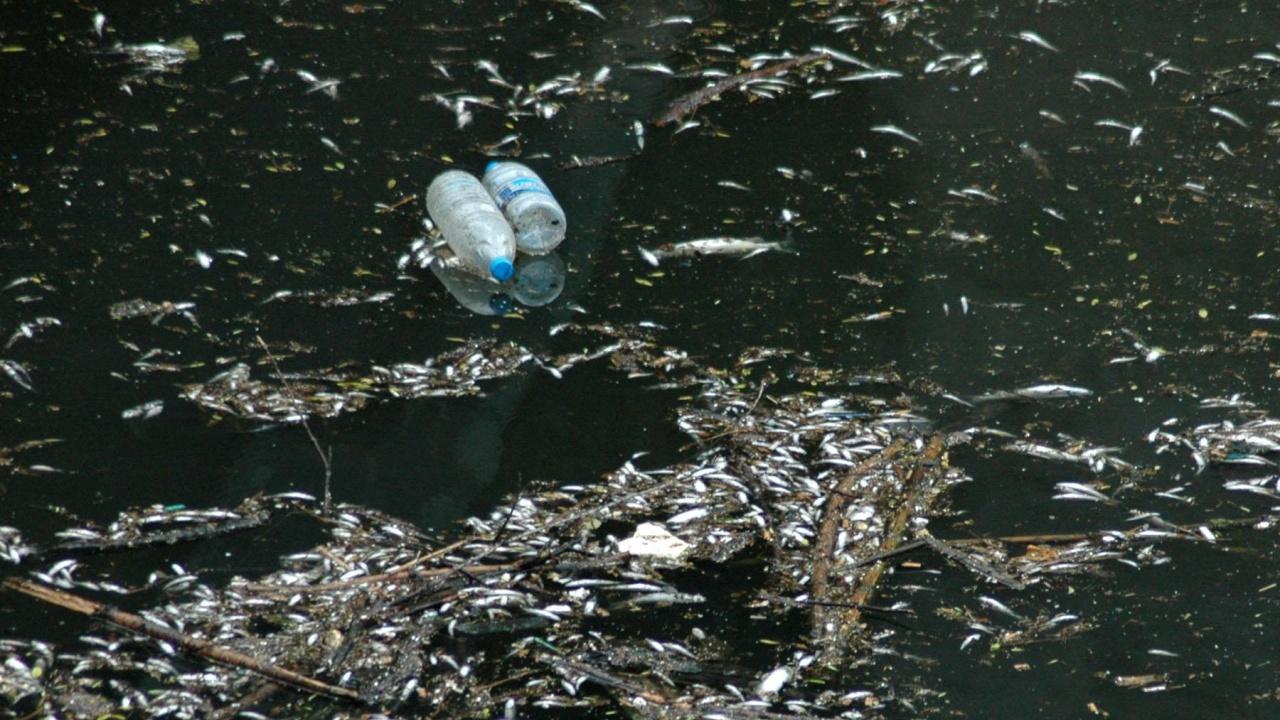 Екоексперти установиха умряла риба в река Камчия след сигнал