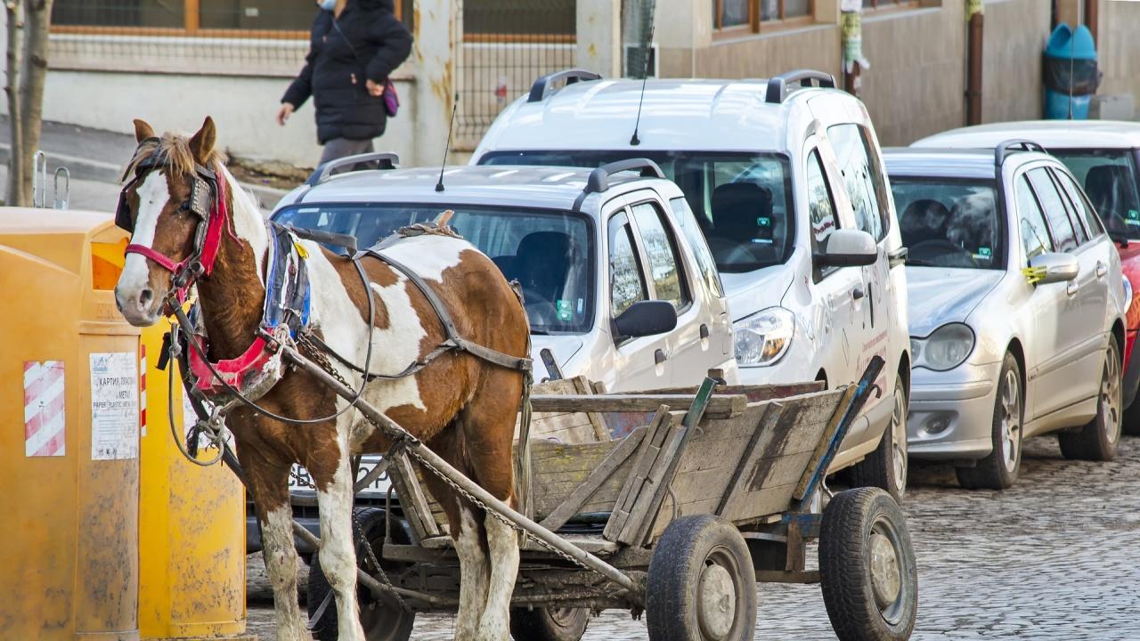 Коне застрашават живота на шофьорите на пътя край Дупница