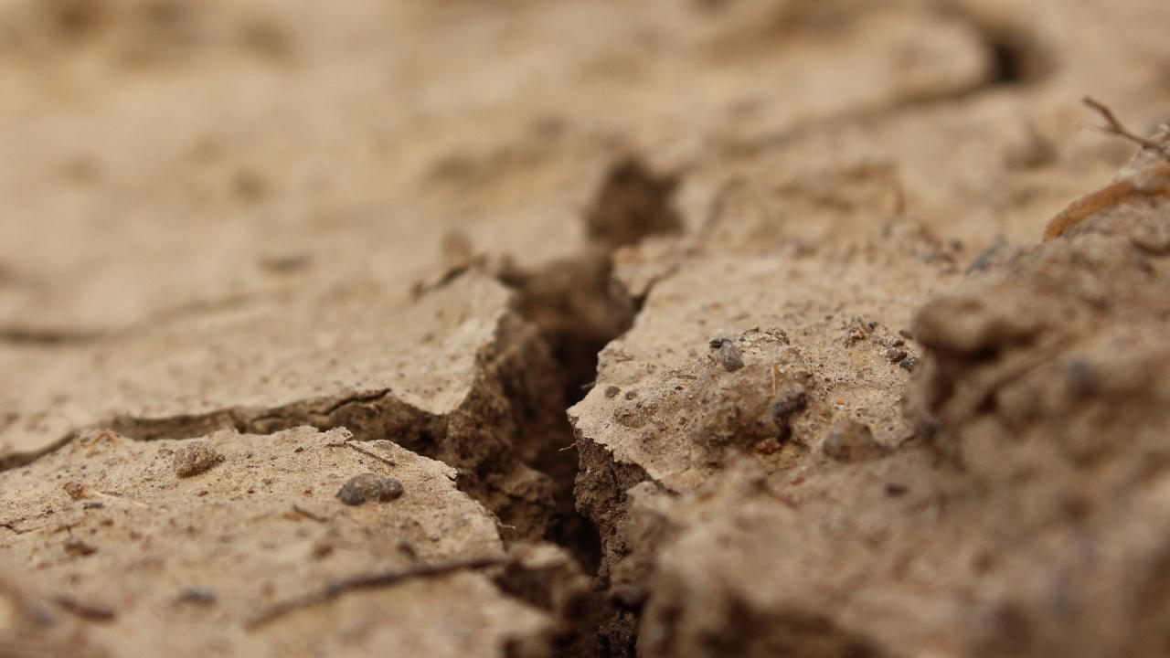 Учени намериха интересен начин, за да се справят със сушата