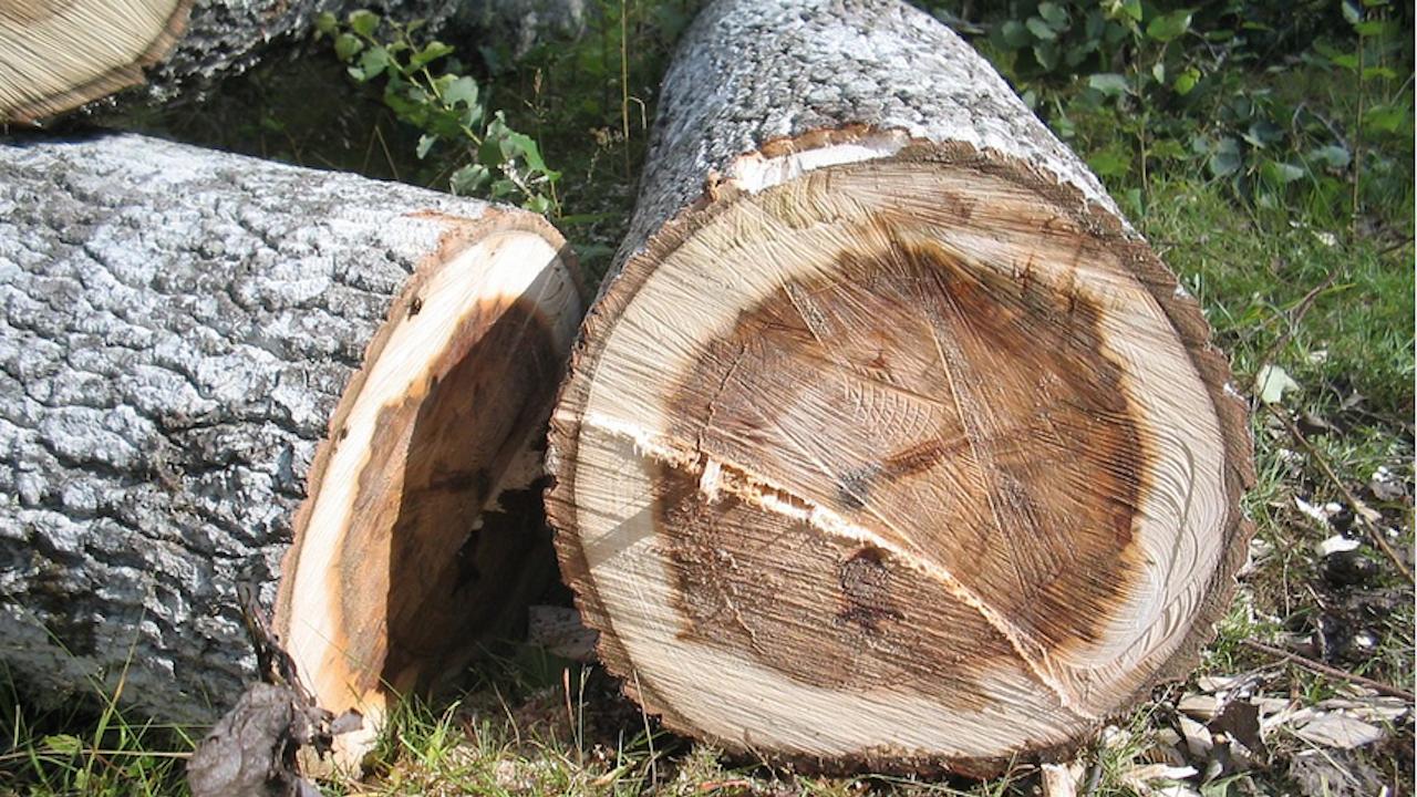 РДГ-Берковица предотврати незаконна сеч в землището на село Враняк