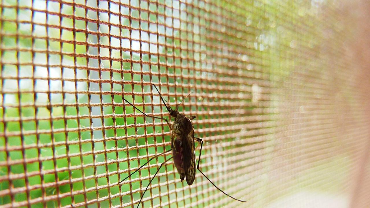 Салвадор - първата централноамериканска страна, напълно победила маларията